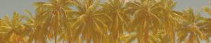 palm-trees-st-maarten-orange
