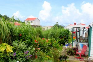 garden-saba