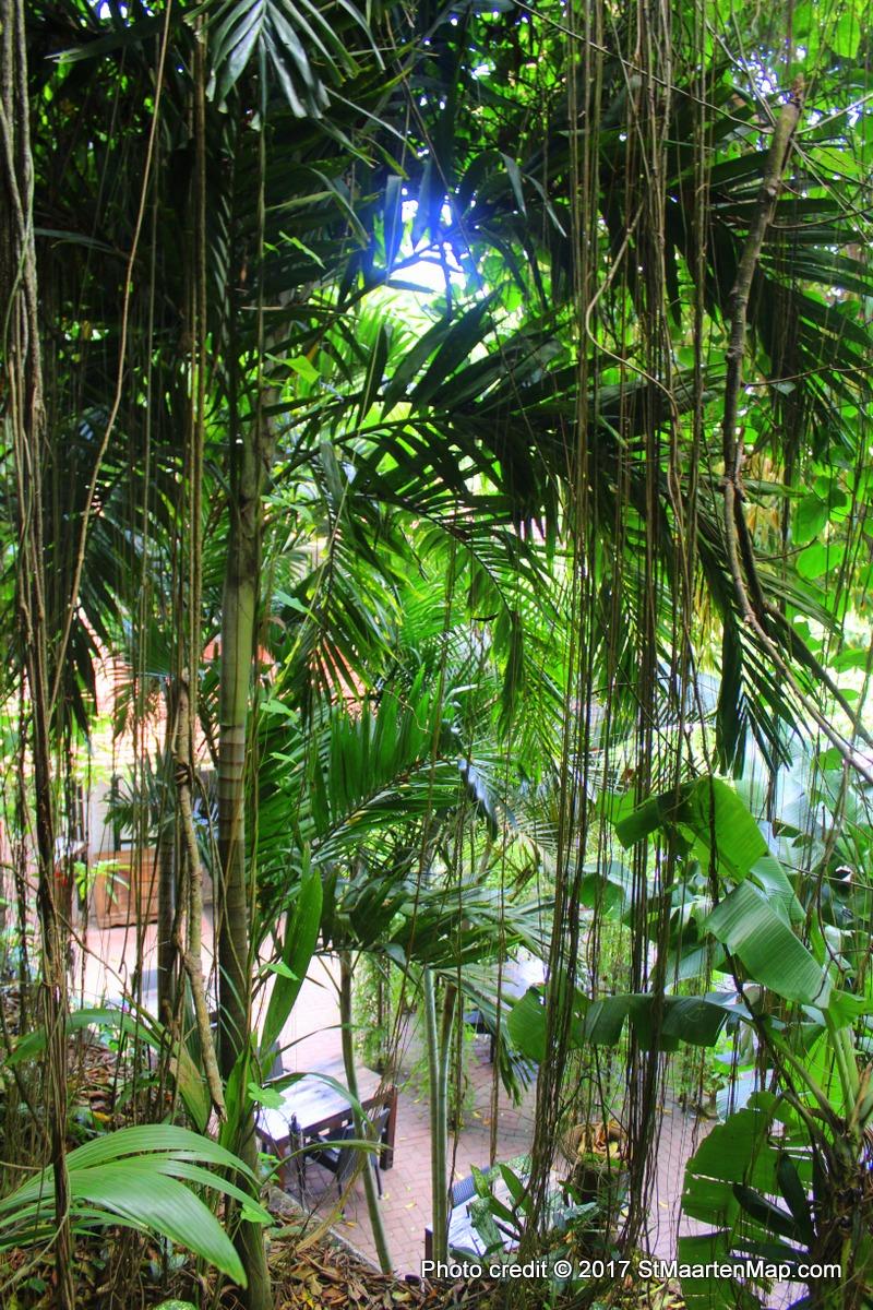 hotel-forest-saba